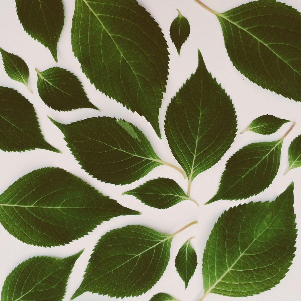 leaves-XNWYFDA_resize