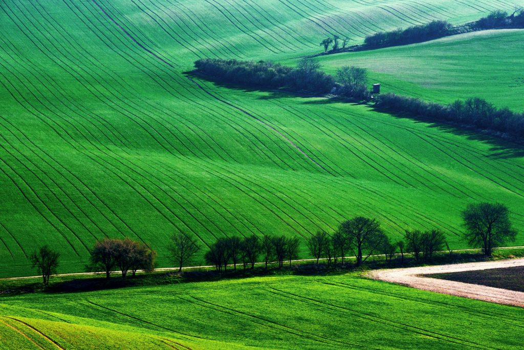 detail-scenery-at-south-moravian-field-during-spri-BWXJZA7_resize