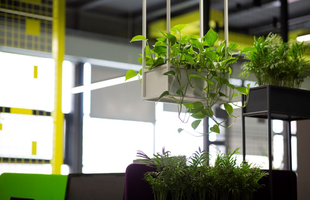 potted-green-plants-over-blurred-background-with-c-25EZEDN_resize