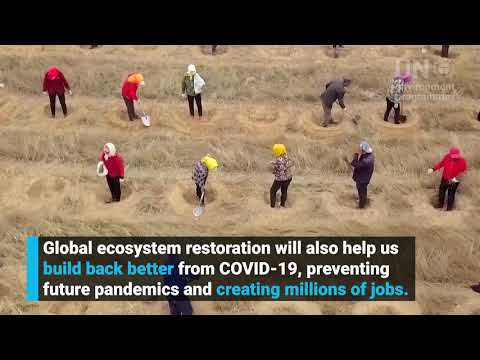 UN Decade on Ecosystem Restoration 10 years to heal the planet