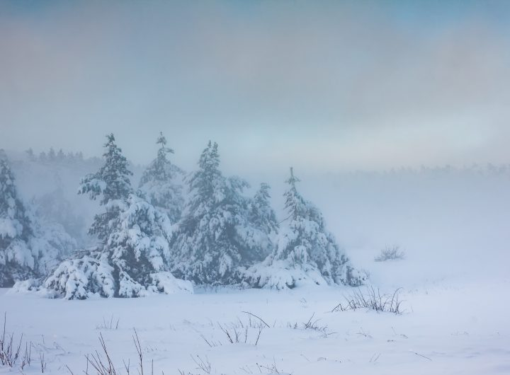 Misty sunrise in the winter forest in the mountains