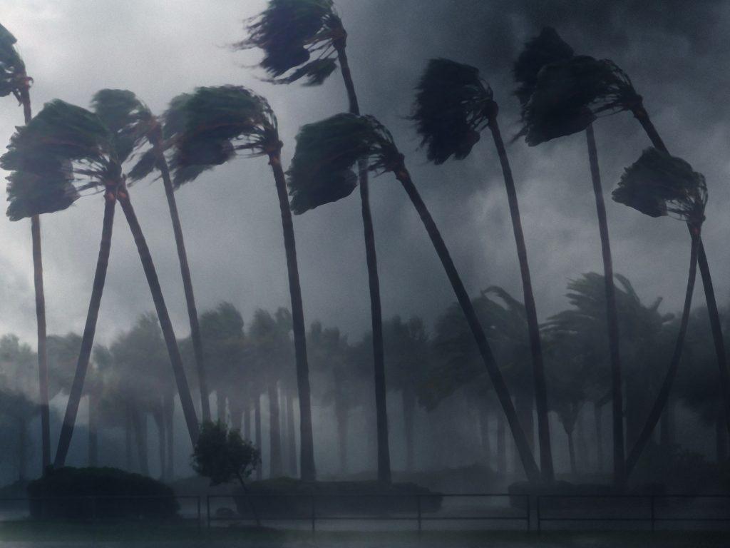 palm-trees-wind-RZ6LDUL