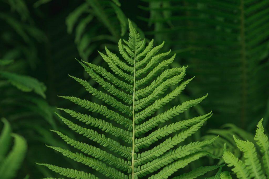 lush-green-background-with-large-fern-leaf-DSVUKPU