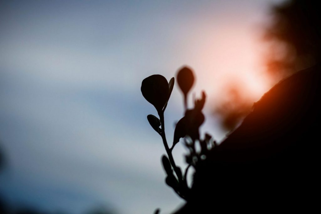 plants-growing-with-silhouettes-PUFV4QH
