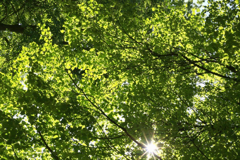 the-bright-sun-shining-through-the-green-foliage-o-5QLTX9Q