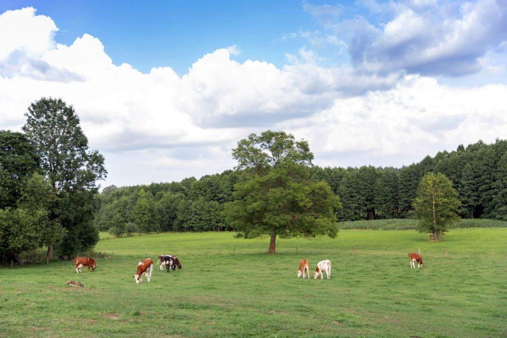 countryside-MVDU4HL
