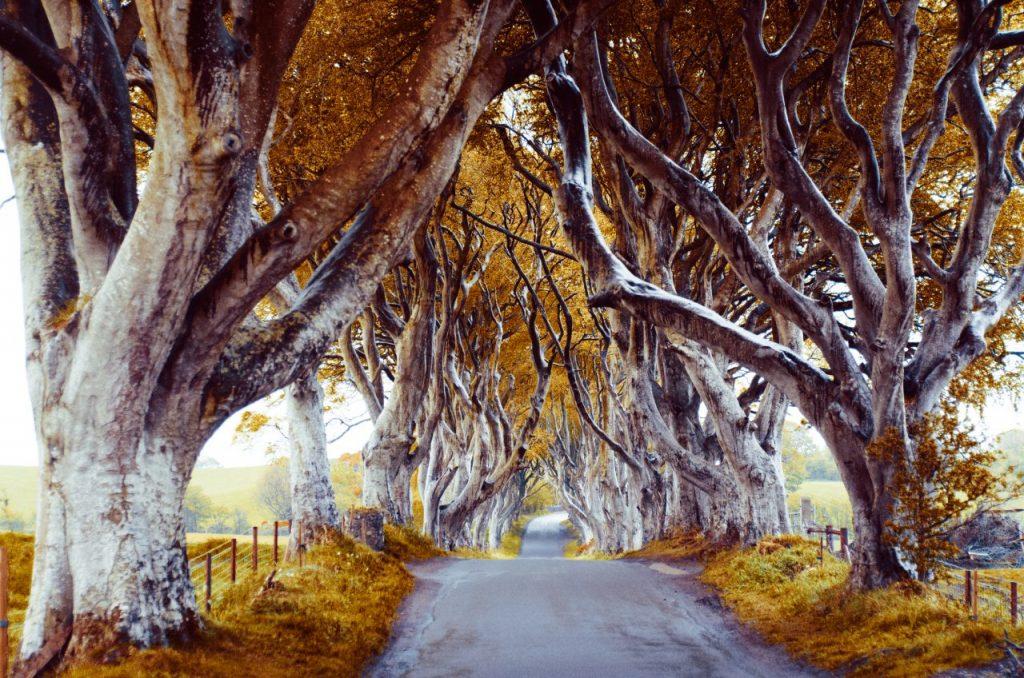majestic-tree-alley-PUQMX3F
