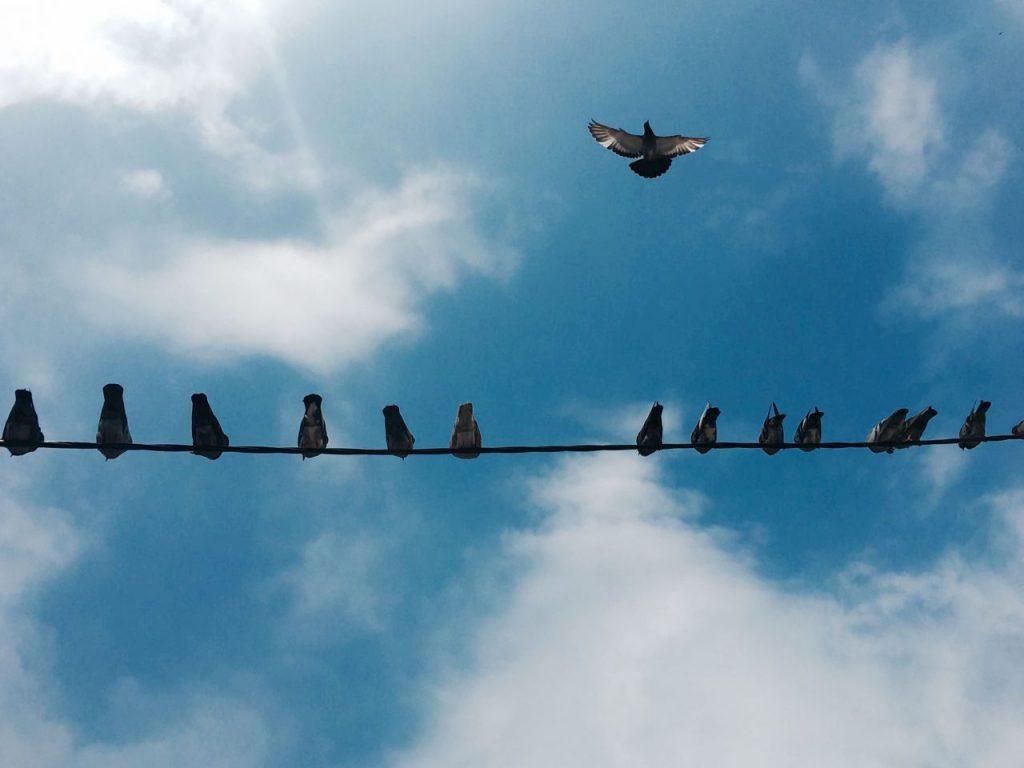 pigeon-vision-RBP96JP