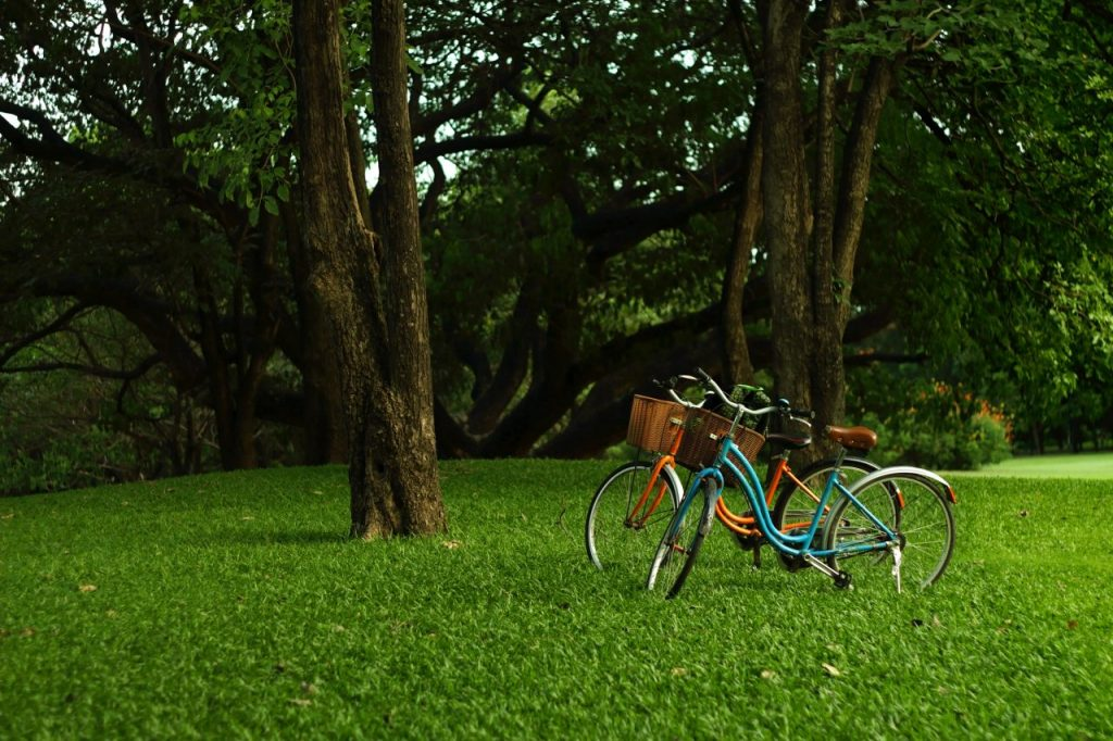 bicycle-in-the-garden-PDEXBRZ
