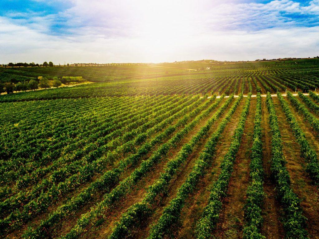 aerial-view-of-beautiful-vineyard-landscape-in-gre-DNZA5BU