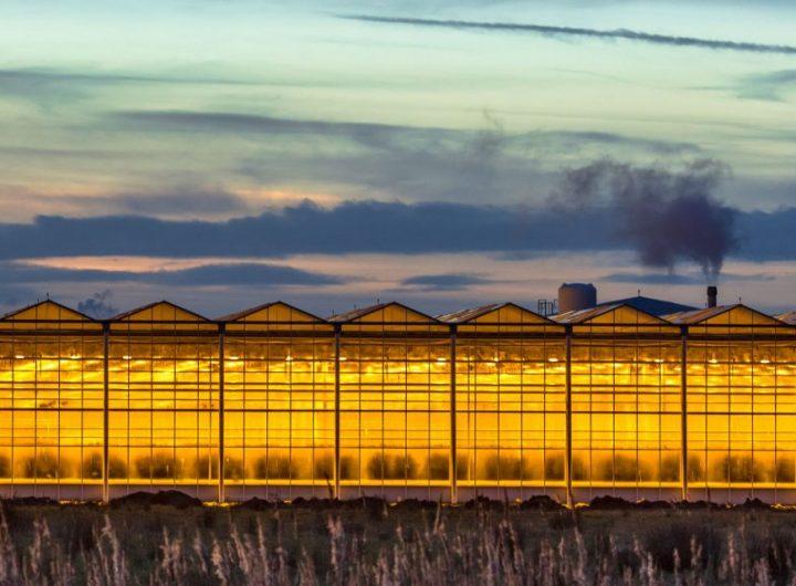 illuminated-industrial-greenhouse-EJ64U9W