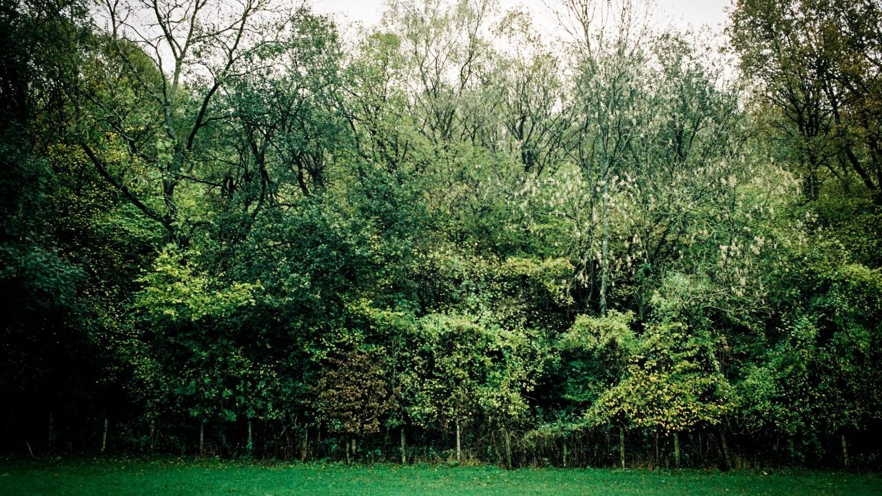 wall-of-trees-PREPKXN