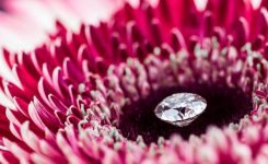 DIAMOND PAGES shutterstock_1064412410